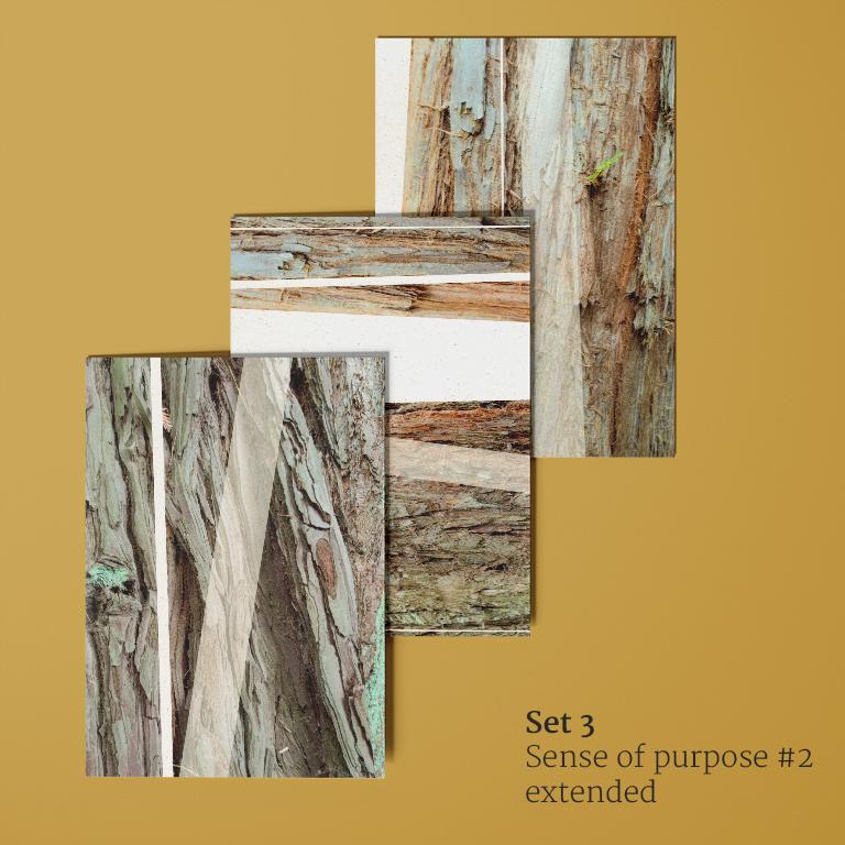 Sense of purpose #2 extended: ansichtkaarten voorkant (schors van mammoetbomen)