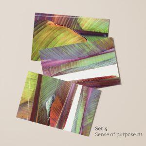 Sense of purpose #1: ansichtkaarten voorkant (blad rode schijnbanaan)
