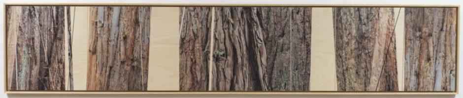 Sense of purpose 2 sequoia