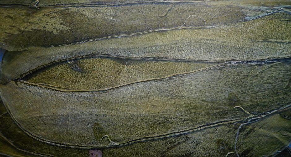 Tuinbonen #1 130 x 70 cm
