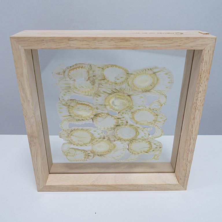 Veggs small framed Fennel